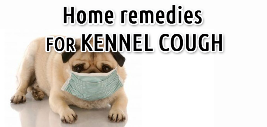 Understanding Kennel Cough Sansaw Kennels