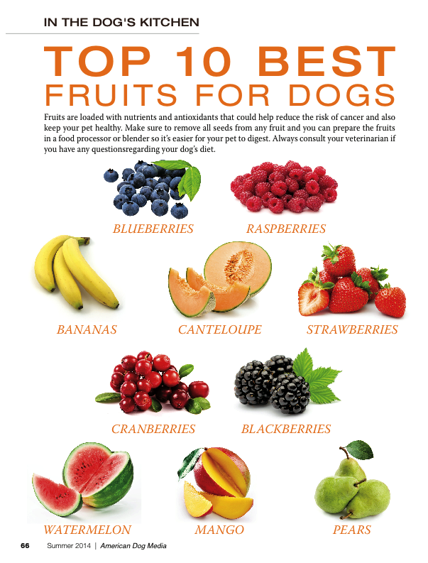 All about the raw dog food diet sansaw kennels type of fruit to use in a raw food recipe for dogs forumfinder Gallery
